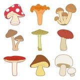 Colorful mushrooms vector set. Vector illustration vector illustration