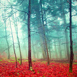 Colorful mystic autumn trees Royalty Free Stock Photo