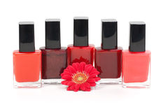 Colorful nail polishes Royalty Free Stock Image