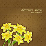 Colorful narcissus Stock Photography