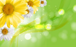 Colorful Naturalistic Beautiful 3D Chamomile Background Vector I. Llustration. Eps10 Royalty Free Stock Photo