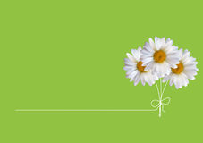 Colorful Naturalistic Beautiful 3D Chamomile Background Vector Illustration. Eps10 Stock Photography