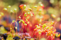 Colorful nature background with macro moss Royalty Free Stock Photography