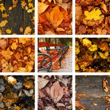 Autumn background. Colorful nature. Beautiful colors of autumn seson Royalty Free Stock Photo