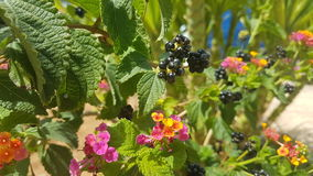 Colorful nature. Fruit colour summer nature sunny vegetable bio green plants Royalty Free Stock Photo