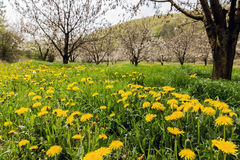 Colorful nature scenery of fresh flowers Stock Images