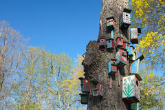 Colorful nesting-boxes Stock Image