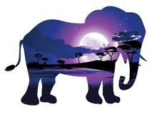 African Night with Elephant Stock Photos