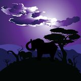 African Night with Elephant Stock Image