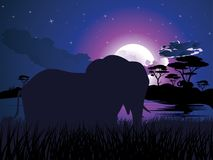 African Night with Elephant Royalty Free Stock Photo