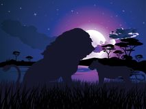 African Night with Lion Royalty Free Stock Image