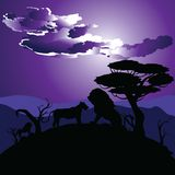 African Night with Lion Stock Photography