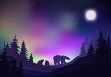 Colorful Night Winter Forest Landscape Template. With bears trees and bright sky vector illustration Stock Image