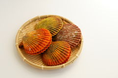 Colorful noble scallop Royalty Free Stock Images