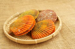 Colorful noble scallop Stock Images