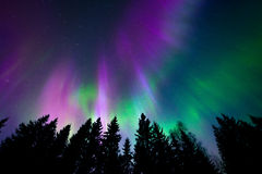 Colorful northern lights. Very intensive color northern lights and trees Stock Photography