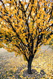 Colorful November Tree Stock Photos