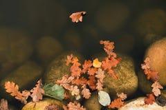 Colorful oak leaf floating on water pond, big boulders in pond bank. Sailing in gentle wind. Royalty Free Stock Photo