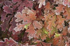 Colorful oak leaves,autumn Stock Photos