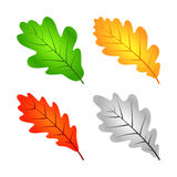 Colorful Oak Leaves Royalty Free Stock Photo