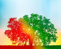 Colorful Oak Tree. A California oak tree with a red to green gradient silhouette and yellow flare added for a colorful, rainbow effect Royalty Free Stock Photography