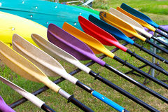 Colorful oars. In the garden Royalty Free Stock Images