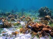 Colorful ocean. Scuba diving in the coral of Bocas del Toro Stock Photos