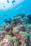 Colorful ocean landscape with lstone corals in the Maldives Stock Images