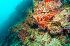 Colorful ocean landscape with red corals in the Maldives Stock Images