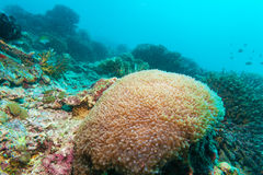 Colorful ocean landscape with yellow corals in the Maldives Royalty Free Stock Photos