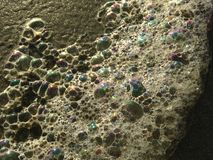 Colorful Ocean Wave Foam Bubbles on Beach Sand. Royalty Free Stock Images