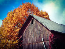 Colorful old barn. Old barn with chipping paint, very colorful, beautiful Stock Images