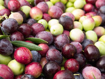 Colorful olives Royalty Free Stock Photos