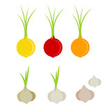 Colorful onion and garlic  icon set Stock Images