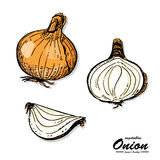 Colorful onion in sketch style Royalty Free Stock Photography