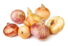 Colorful onions Stock Images