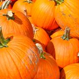 Pumpkins on a Fall day in Groton, Massachusetts, Middlesex County, United States. New England Fall. Colorful orange pumpkins on display at a farm in Town of stock images