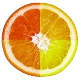 Colorful orange slice Royalty Free Stock Image