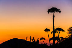 Colorful orange sunset with palm trees Royalty Free Stock Photos