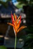Colorful orange tropical strelitzia flowers Stock Image