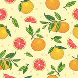 Colorful oranges and grapefruits on light beige background Stock Images