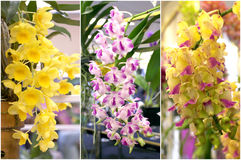 Colorful orchid bouquet. Violet and yellow orchid bouquet Royalty Free Stock Photo