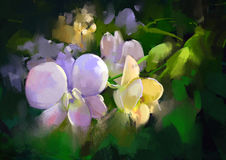 Colorful orchid flowers. Beautiful painting of orchid flowers Stock Photos