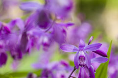 Colorful orchid flowers Stock Photos