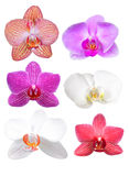 Colorful orchid flowers Royalty Free Stock Photography