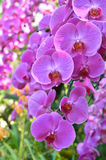 Colorful of orchid in garden Royalty Free Stock Images