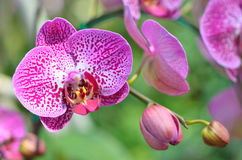Colorful of orchid in garden Stock Images
