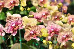 Colorful of orchid in garden Royalty Free Stock Photo