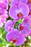 Colorful of orchid in garden Royalty Free Stock Photos