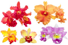 Colorful orchid isolated with Clipping Paths Stock Photo